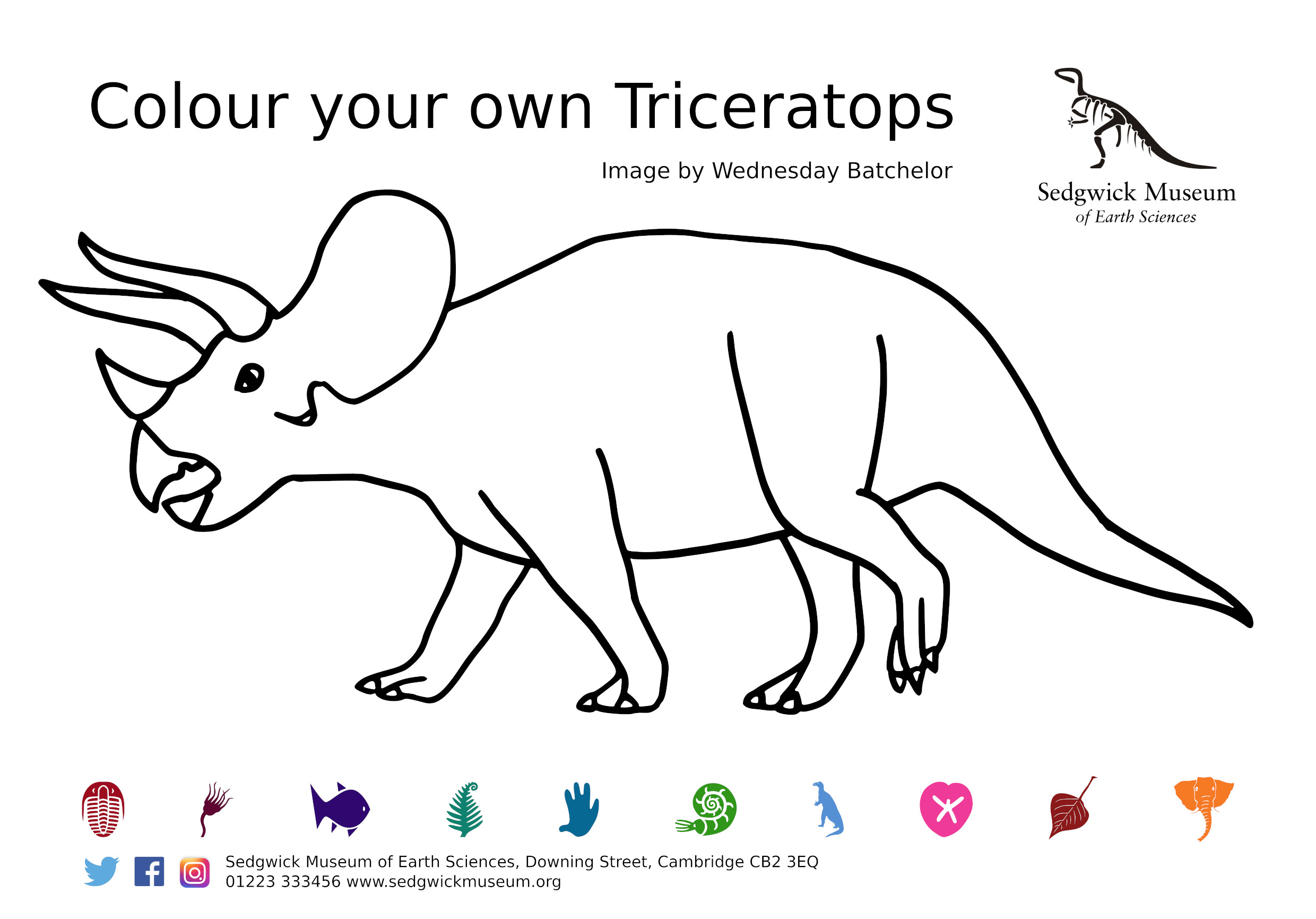Triceratops colouring