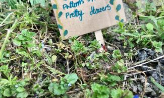 Small sign next to wild flowers.