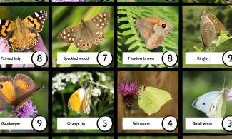 Butterflies on a bingo card