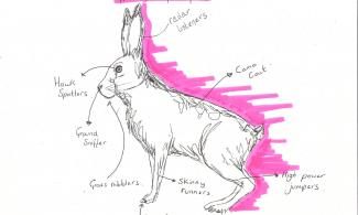 Anatomy of a hare
