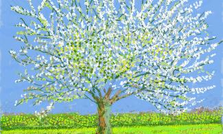 Painting of a blossom tree