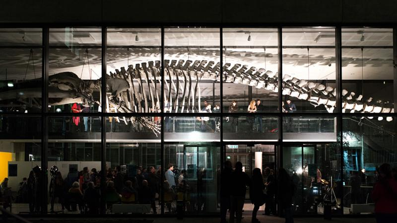 The Whale Hall at night